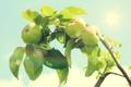 Картинка листья, солнце, свет, ветки, природа, блики, дерево