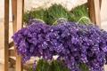Картинка lavender, букет, лаванда, flowers