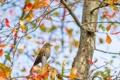 Картинка осень, небо, листья, ветки, дерево, птица