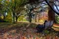 Картинка осень, листья, деревья, скамейка, парк, Новая Зеландия, New Zealand
