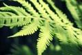 Картинка лето, растения, папоротник