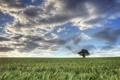 Картинка пейзаж, поле, дерево