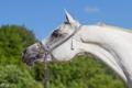 Картинка небо, морда, конь, лошадь, грива, профиль, шея