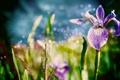 Картинка цветок, трава, макро, цветы, природа, листки, nature