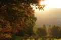 Картинка солнце, свет, природа, дерево, листва, паутина