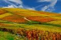 Картинка осень, небо, поля, вноградники