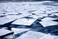 Картинка лед, вода, птица