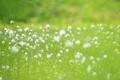 Картинка зелень, поле, лето, трава, макро, природа, растения