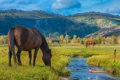 Картинка поле, трава, ручей, кони, лошади, пастбище