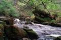 Картинка лес, река, камни, мох, поток, пороги