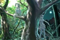 Картинка лес, деревья, ночь, луна, девочки, аниме, день