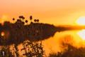 Картинка закат, река, Grigory Karaman, GK media, Kaluga, Калуга, природа