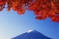 Картинка листья, снег, япония, гора, красные