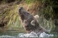 Картинка природа, вода, медведь
