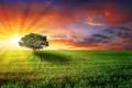 Картинка поле, солнце, лучи, природа, дерево, рассвет