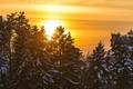 Картинка деревья, пейзаж, закат