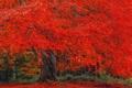 Картинка осень, крона, листва, дерево