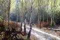 Картинка forest, nature, autumn