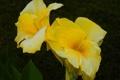 Картинка цветок, желтый, заморский