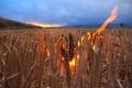 Картинка поле, небо, облака, закат, огонь, пламя, жнивье