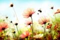 Картинка цветы, пчела, весна, лепестки, шмель, flowers, spring