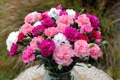 Картинка цветок, цветы, букет, гвоздики