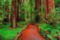 Картинка зелень, лес, деревья, дорожка, кусты