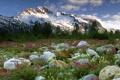 Картинка лес, цветы, горы, камни, Canada