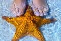 Картинка море, вода, ракушки, shells, starfish, seashells