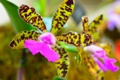 Картинка макро, лепестки, экзотика, орхидея