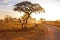 Картинка пейзаж, природа, Sunset in Tarangire