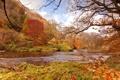 Картинка осень, лес, деревья, река, течение, берега, красно-жёлтая листва