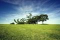 Картинка поле, небо, трава, облака, деревья, абстракции, обработка