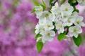 Картинка цветение, весна, ветка