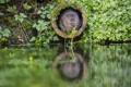 Картинка green, water, plants, Pipe, The rat molehill