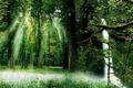 Картинка лес, лучи, деревья, дуал