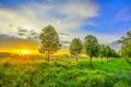 Картинка деревья, пейзаж, закат, природа, фото, рассвет, поля