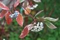 Картинка осень, природа, ягоды, обои, белые, проулка, деоевня