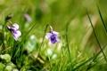 Картинка трава, макро, цветы, природа, растения