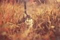Картинка кот, глаза, трава, котенок, идет, хвост, мордочка