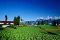 Картинка облака, зелень, ферма, заборы, деревья, дома, растения