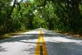 Картинка nature, лето, зелень, листья, деревья, дорога, разметка