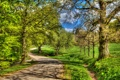 Картинка трава, деревья, Schlosspark Wilhelmshöhe-7