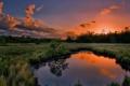 Картинка лес, вода, облака, закат