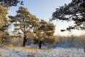 Картинка зима, деревья, пейзаж, природа