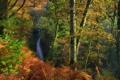 Картинка осень, лес, деревья, ветки, Англия, водопад, кусты