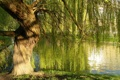 Картинка зелень, ветки, дерево, берег, New Zealand, Abel Tasman National Park