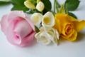 Картинка розы, букет, лепестки, бутон