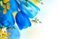 Картинка вода, цветы, water, flowers, tulips, мимоза, веточки вербы