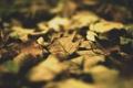 Картинка листья, макро, фото, обои, листок
